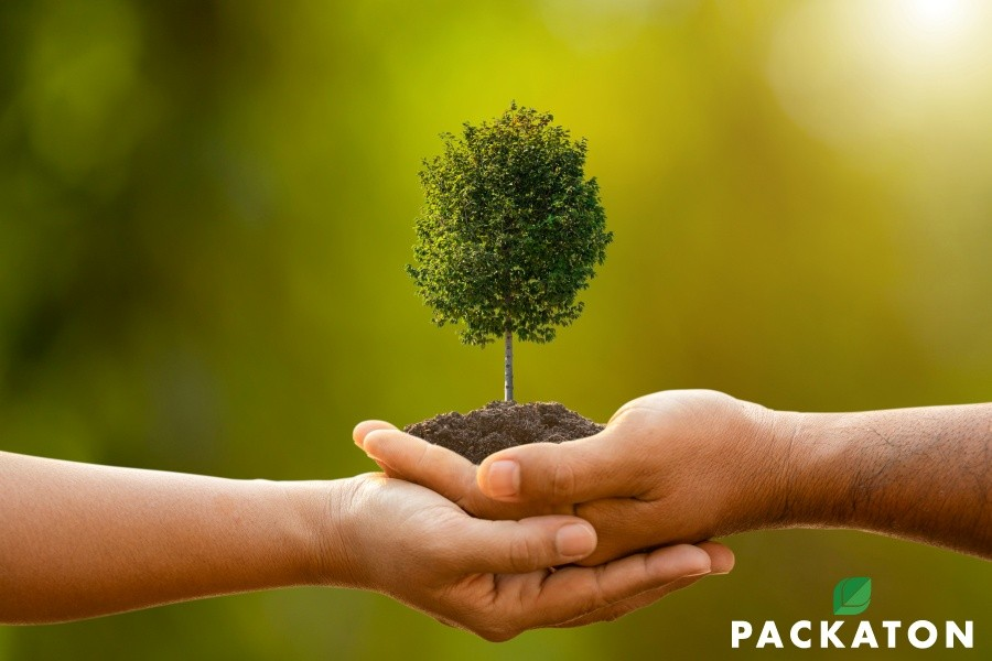 Sustainable Managed Forestry: What Is ISEGA, FSC, & PEFC Certified Paper?